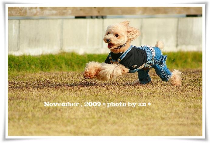 20091130_5377.jpg