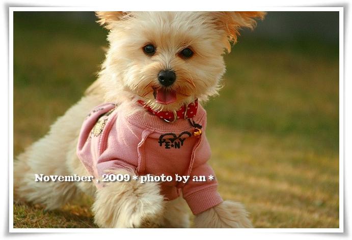 20091130_5455.jpg