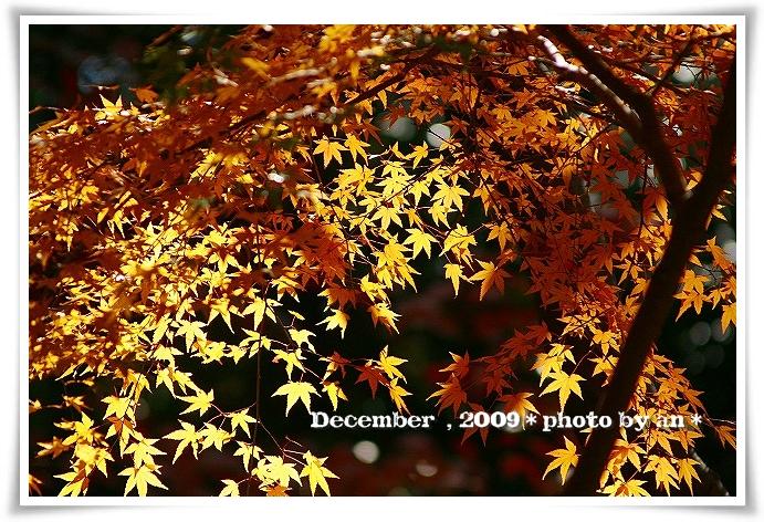 20091201_5589.jpg
