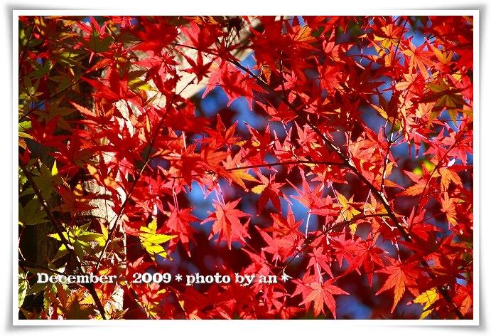 20091201_5603.jpg