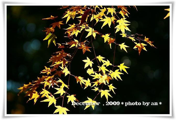20091201_5606.jpg