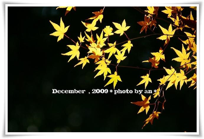 20091201_5610.jpg