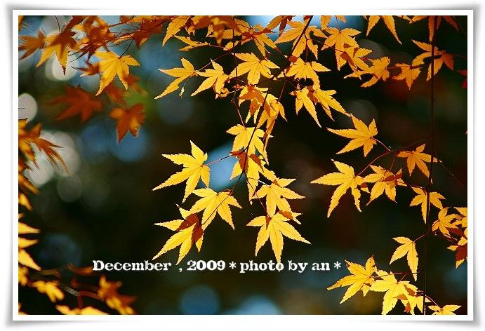 20091201_5620.jpg