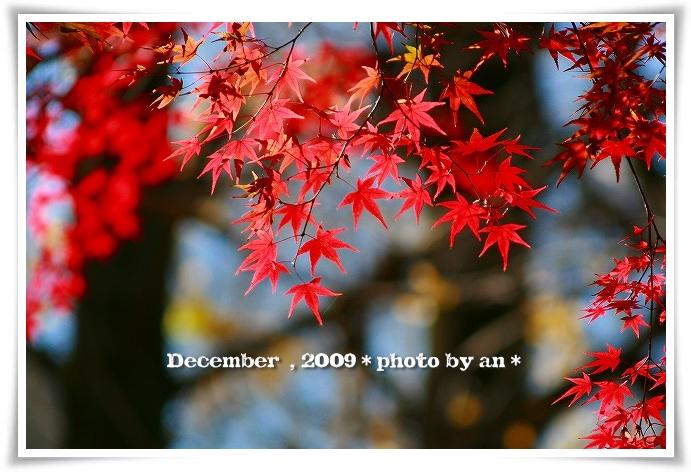 20091201_5636.jpg