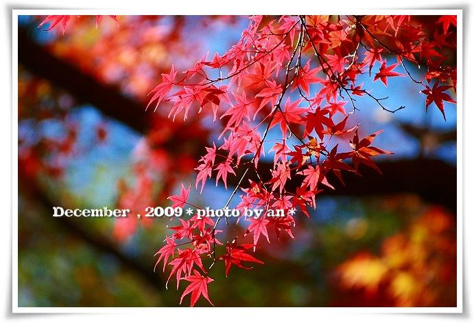 20091201_5666.jpg