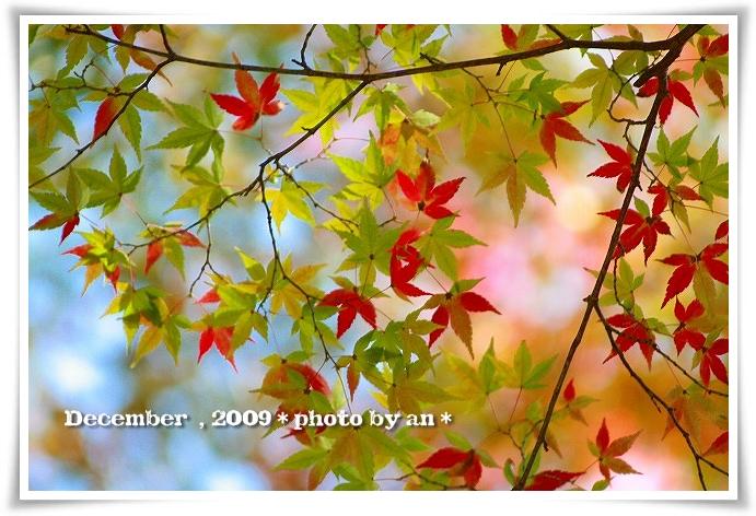 20091201_5733.jpg