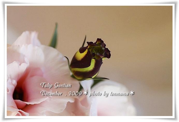 20091210_0874.jpg