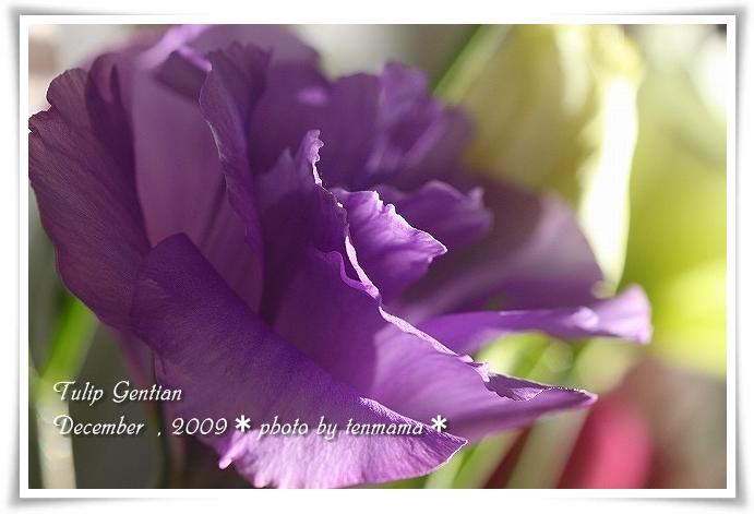 20091210_0912.jpg