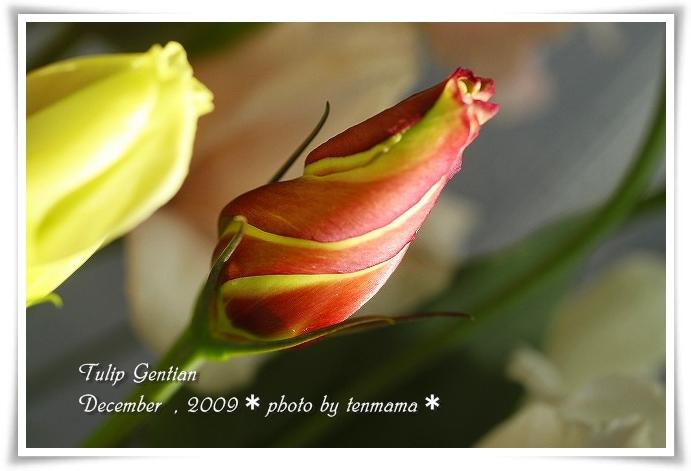 20091210_0915.jpg