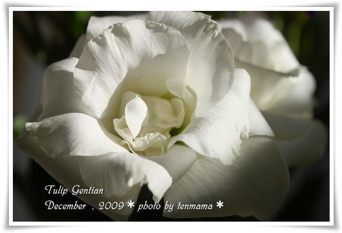 20091210_0929.jpg