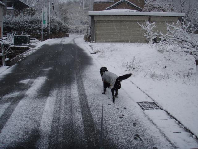 初雪 らん