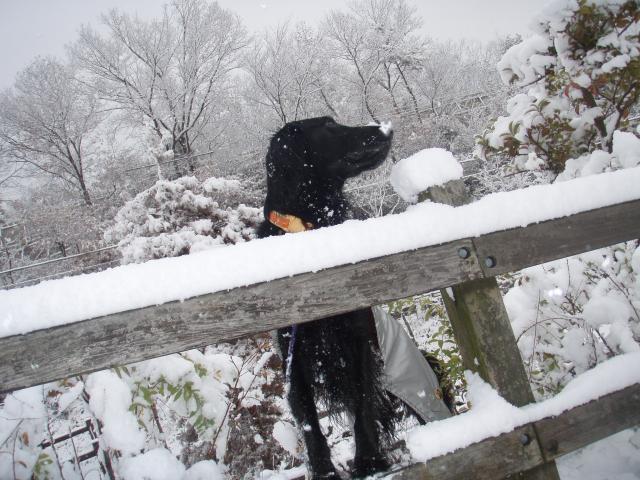初雪 091219