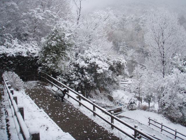 初雪 らん6