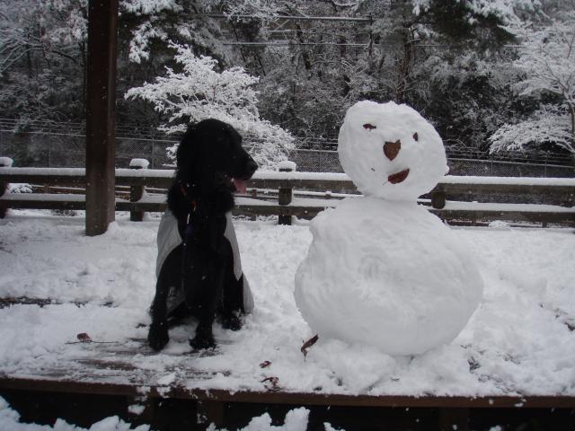 初雪 らんと雪だるま
