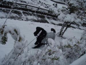 初雪 らん7