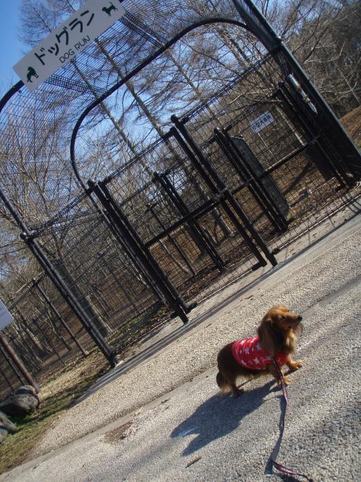 ふるさと公園 ドックラン