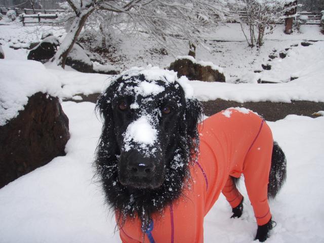 元旦 雪あそび