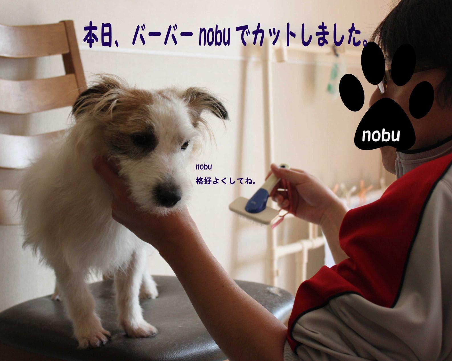 s_バーバーnobu