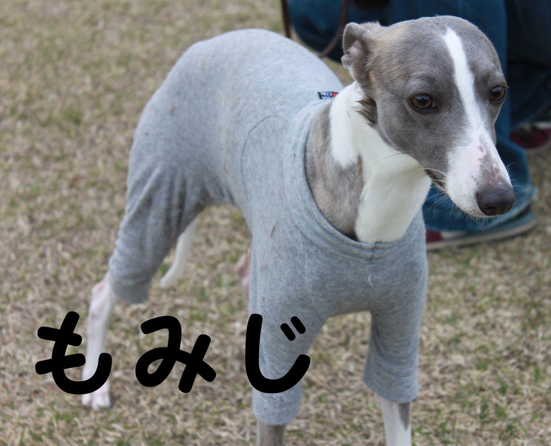 s_もみじ