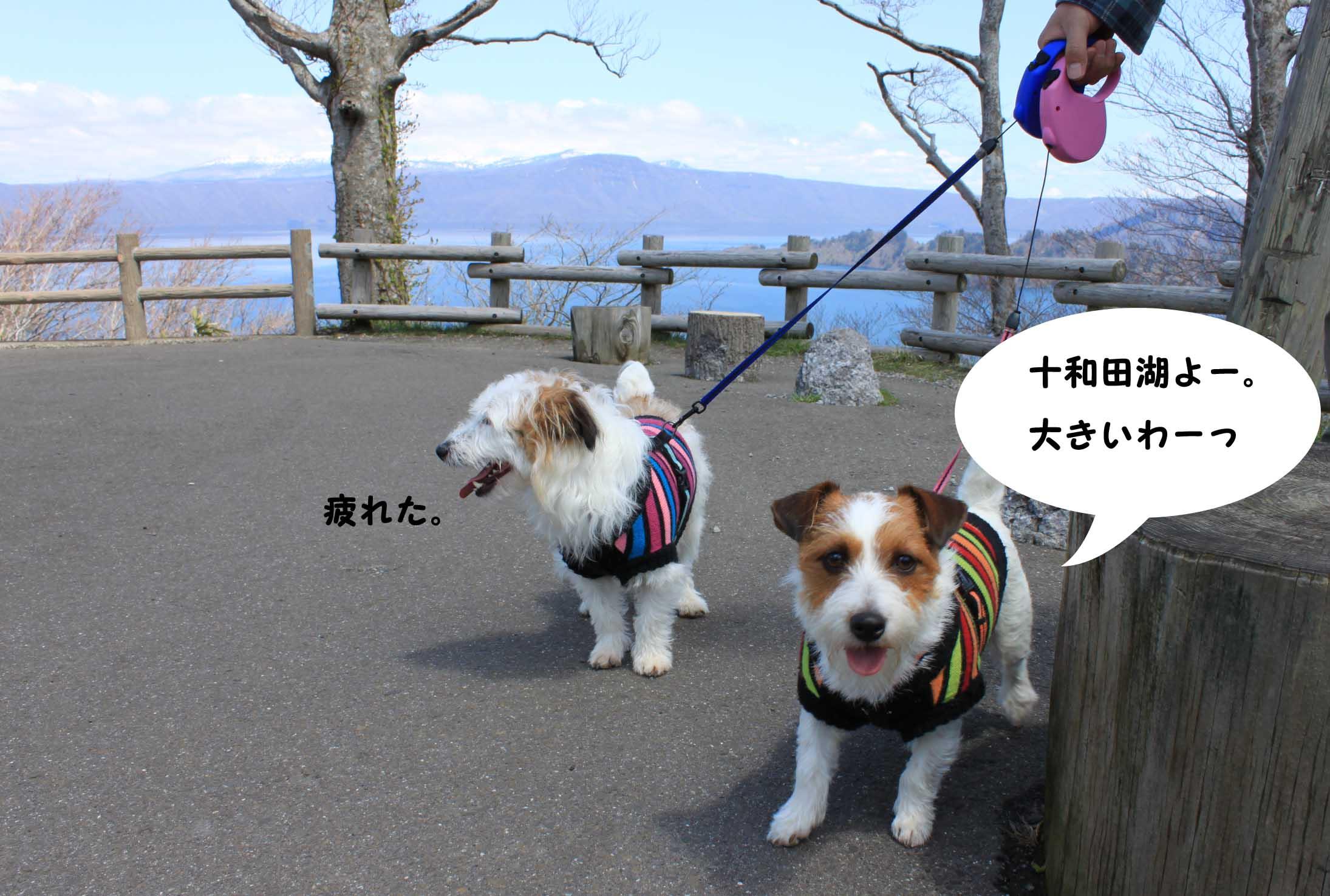 十和田湖よー