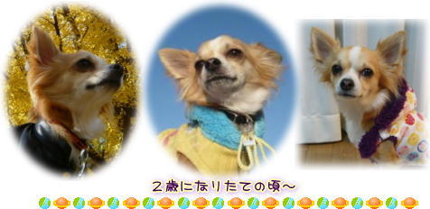 09-11 ありがとうRay 1