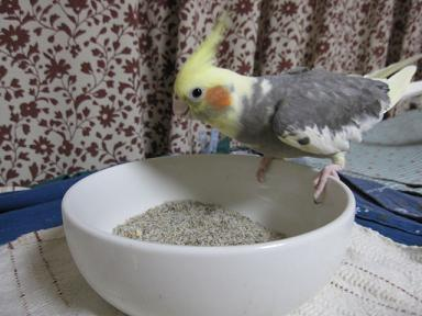 焼き砂ぱくぱく・・・あんこちゃん