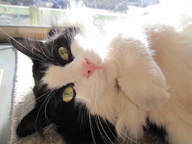 もうすぐココの猫になって一年になります♪