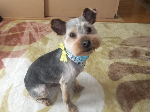 2011_0428保護犬0037