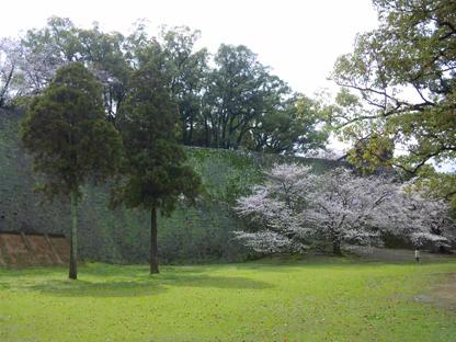 熊本城桜りん2s