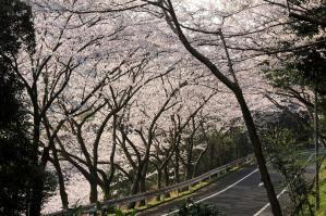 関門桜トンネル