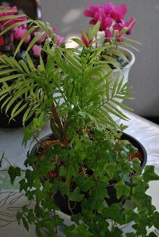 りふれ整体院「観葉植物003」