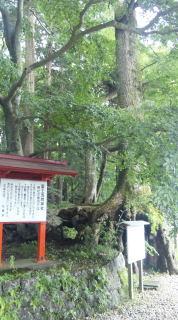 fuji003.jpg