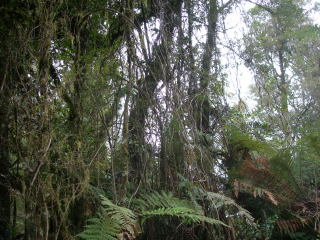 newzealand71.jpg