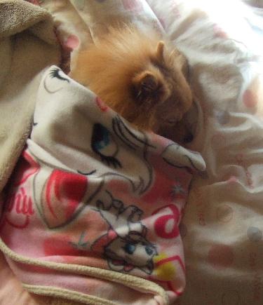 レオ、マリーちゃんの毛布