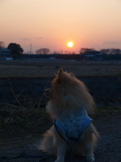 夕日とレオ