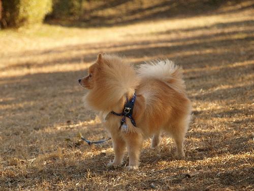 レオ、公園で