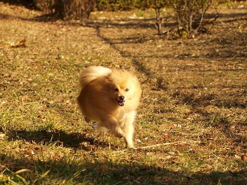 レオ走る!