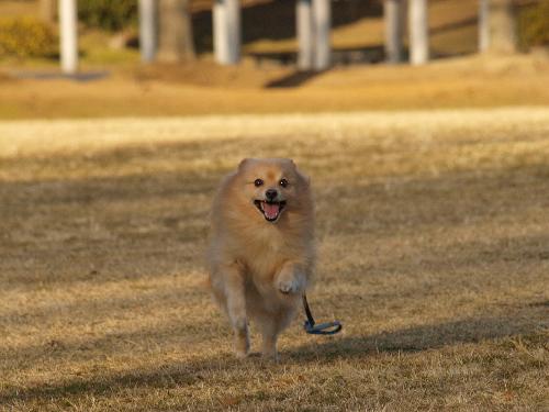公園で走るよ~