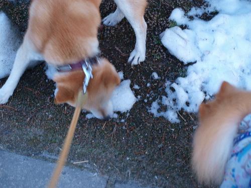 雪を食らう