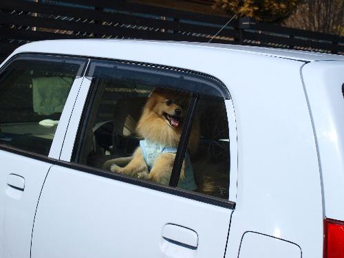 レオは車で^^