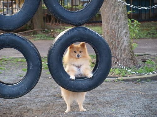 タイヤの中で
