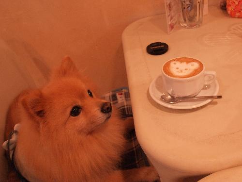 お変わりカフェラテ