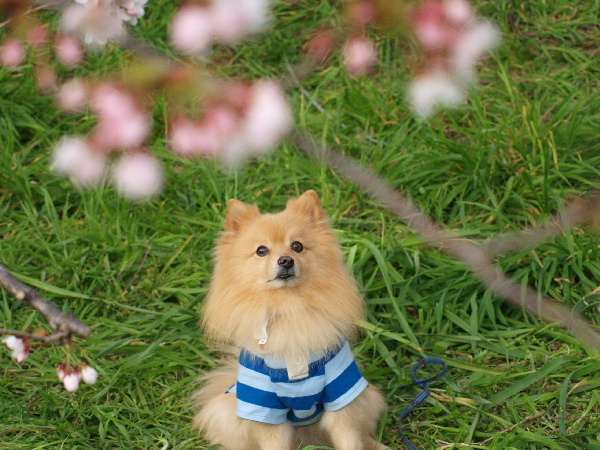 桜を見てるね