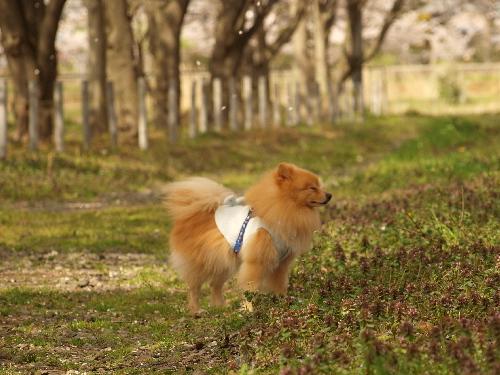 あっ!また風!