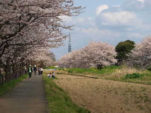 桜の小道で