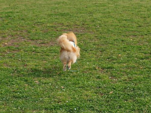 後姿も飛行犬