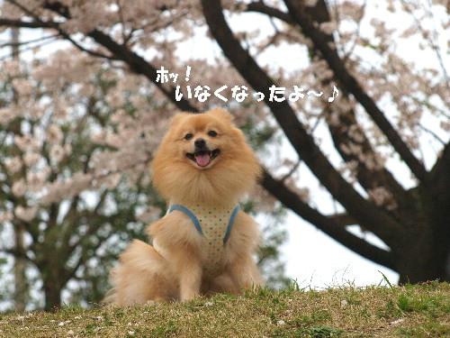 桜の下良いお顔