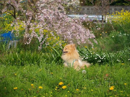 春の花の中