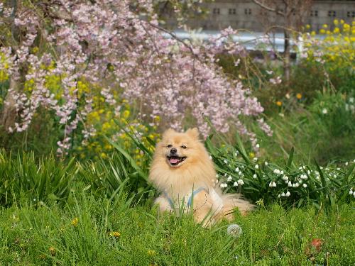 春の花の中で