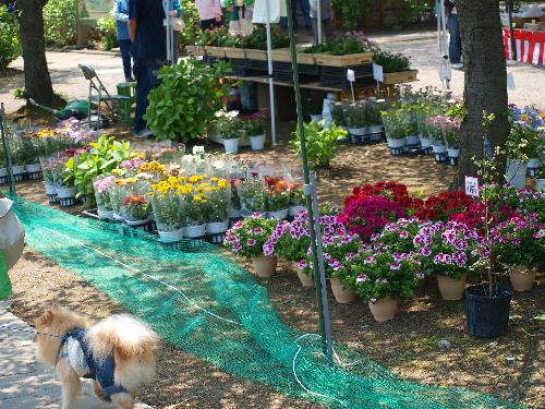 お花の売店